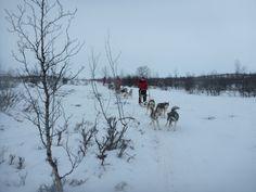 Escursione con i cani da slitta - Dogsledding tour (Riccardo Tebano, Abisko)
