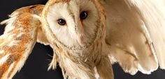 Animal portraits by Lennette Newell
