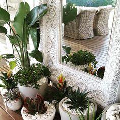 the grove byron bay - plants