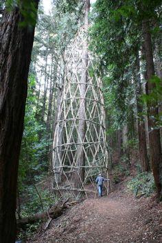 Redwood Vortex, Chris Drury