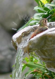 Simple Pleasures / hummingbird bath /  fineartamerica.com. Photo by Jennie Marie Schell