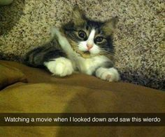 Funny Animal Pictures Of The Day - 23 images Gotta screen those scary movies for our kitties.