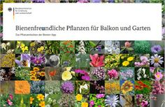 Bee friendly plants (in German) Bee Friendly Plants, Birds And The Bees, Side Yards, App, Outdoor Decor, Food Inspiration, Gardening, Cook, Running