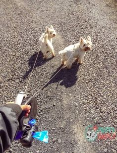 Best retractable dog leashes are very convenient tools for letting your pooch explore its surroundings while still retaining some degree of control over its mov