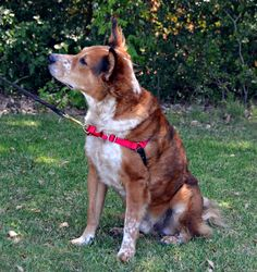 The Dog Geek: Product Review: Premier EasyWalk Harness
