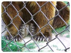 Streamzoo photo - Bear Sanctuary - Hungary