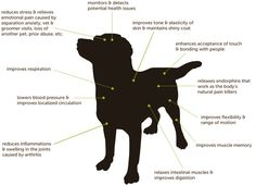 How massage affects your dog
