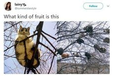"""Forty-Seven Stupid Yet Funny Memes - Funny memes that """"GET IT"""" and want you to too. Get the latest funniest memes and keep up what is going on in the meme-o-sphere. Funny Animal Memes, Cute Funny Animals, Cat Memes, Funny Cute, Cute Cats, Funny Memes, Cats Humor, Funny Kitties, True Memes"""