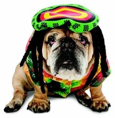 Hey Mon! This super cute Zelda Rasta Dog Costume will make your pup feel super cool.