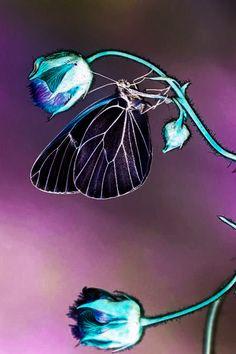 Wasp, Beautiful Butterflies, Dragonflies, Hummingbird, Moth, Butterfly, Gardens, Plastic, Crafts