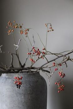 "seasonsofwinterberry:  ""Winterberries….  """