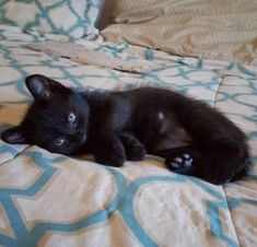 Let's Face It, You Just Can't Get A Black Cat (like this cute black kitten).