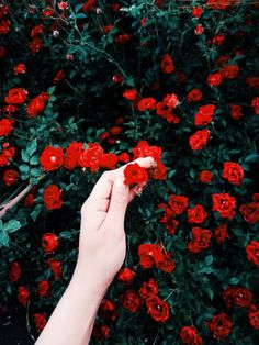 See more of annvoo's content on VSCO. Fred Instagram, Instagram Feed, Aesthetic Colors, Aesthetic Pictures, Feed Insta, Madame Red, Beautiful Flowers, Beautiful Pictures, Foto Casual