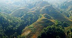 Rice terraces in Sapa. #sapa #rice #terrace #rural #travel #vietnam
