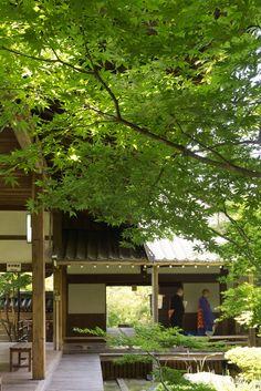 """ileftmyheartintokyo: """" Kyoto in green by Yoshi Shimamura Via Flickr: Taken at Eikan-do of Zenrinji temple, Kyoto. """""""