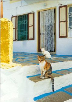 amoureux des chats - Le blog de kimcat