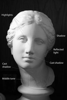 female face distribution of light