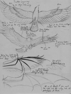 How to draw wings and feathers
