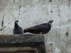 Kolkata Love Bird