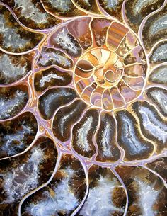 Like little nebulas inside each compartment- the idea that a little universe can exist in such a tiny space ~~~Ammonite ~ Nautilus appear similar. Patterns In Nature, Textures Patterns, Nature Pattern, Art Fractal, Ammonite, Natural Forms, Rocks And Minerals, Sacred Geometry, Sea Shells
