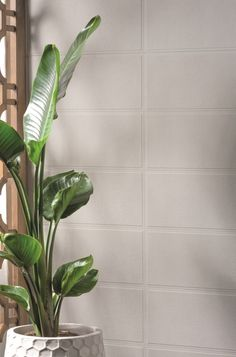 Origin Block White Wall Tiles from Tile Mountain only per tile or per sqm. Order a free cut sample, dispatched today - receive your tiles tomorrow White Wall Tiles, White Walls, Plant Leaves, The Originals, Plants, White Tiles, Off White Walls, Blank Walls, Flora