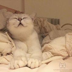 """cats_of_instagram: """"From @supersweetxmoumi #catsofinstagram"""""""