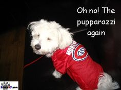 Montreal Canadiens dog (spawty)