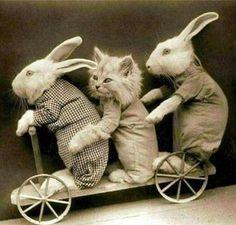 Cat in a dress day is always open for interpretation.