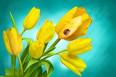 Flowers, Spring, Tulips, Plant