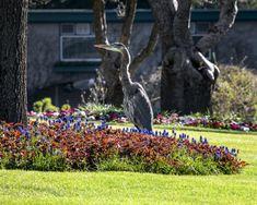 A Virtual Visit - The Butchart Gardens Seoul Garden, Buchart Gardens, Victoria Vancouver Island, Bush Garden, America Images, Victorian Gardens, Sunken Garden, Cottage Garden Plants, Most Beautiful Gardens