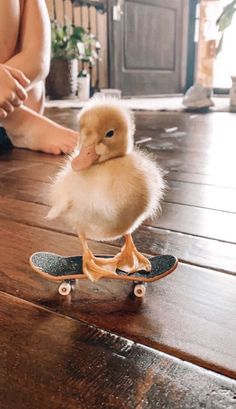 my duck is cooler than yours😎 Baby Animals Super Cute, Cute Little Animals, Cute Funny Animals, Funny Owls, Cutest Animals, Baby Animals Pictures, Cute Animal Photos, Funny Animal Pictures, Baby Pictures