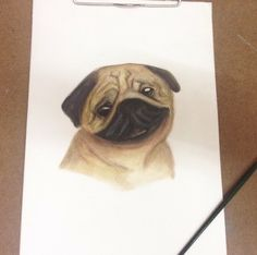 pug with water color pencil by tuang
