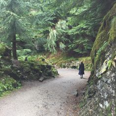 Love the nature in Norway. Forest. Fløjen, Bergen.