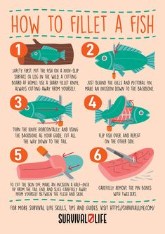 Learning how to fillet a fish is a skill that can come in handy for any prepper both indoors and outdoors. Different fish call for different techniques but other aspects of filleting are constant. Here is a detailed roundup for several groups of fish. #fishfillet #howtofilletafish #fillet #survivalskills #prepper #survival #survivallife Survival Mode, Homestead Survival, Survival Prepping, Survival Skills, Fish And Seafood, Seafood Dishes, Different Fish, Doomsday Prepping, Fillet Knife