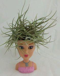 Tillandsia Doll head planter