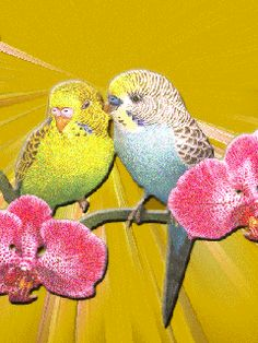 beautiful animated gif birds | Animated GIF