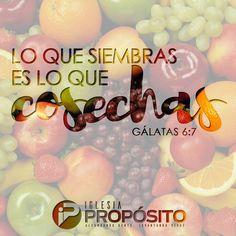 Lo que siembras es lo que cosechas. Gálatas 6:7