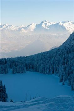 Snow covered trees and mountains in the background