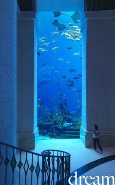 dubai-aquarium.jpg (600×969)