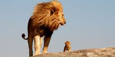 PHOTO: Here's 'Simba' And 'Mufasa' In Real Life