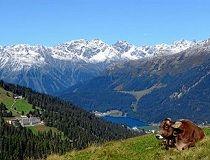 In Davos heerst een gezond en droog klimaat en het gebied is internationaal befaamd als kuuroord en congrescentrum. Bovendien heeft het een reputatie van waar ski- en langlaufparadijs.