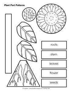 Plant Part Patterns, Lesson Plans - The Mailbox