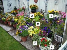 Container Garden Recipes: A = Pansy, B = Nasturtium, C = Alyssum, D = Fuchsia, E = Marigold: Names of flowers: A = Pansy, B = Nasturtium, C = Alyssum, D = Fuchsia, E = Marigold  Image used under a creative commons licence with the kind permission