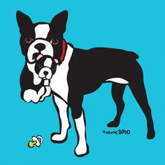 More About Boston Terrier Grooming #bostonterrierofig #bostonterrierfinds #bostonterriergirl #bostonterrierphotos