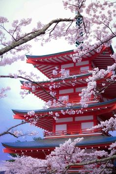 Japon - - - Best of Wallpapers for Andriod and ios Beautiful World, Beautiful Places, Beautiful Gardens, Cherry Blossom Japan, Japanese Cherry Blossoms, Japanese Blossom, Japanese Castle, Japanese Pagoda, Japanese Shrine