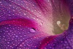 macro flower | Flickr - Photo Sharing!