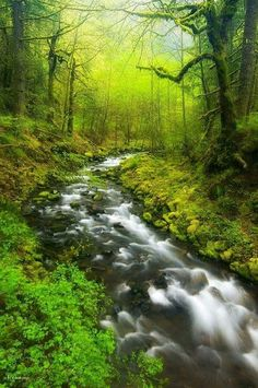 Morning Misty Creek by Darren White Wonderful Places, Beautiful Places, Beautiful Pictures, Forest Path, Green Landscape, Nature Pictures, Amazing Nature, Beautiful World, The Great Outdoors