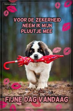 Good Day, Good Morning, Dutch Quotes, Smiley, Sayings, Happy, Animals, Hugs, Whiskey