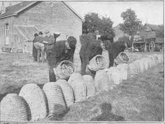 skeps at a Dutch Bee-Market around 1900