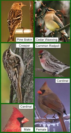 michigan wild bird species | Wild Birds Unlimited